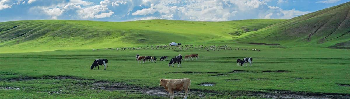 金帐汗草原