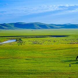 草原天路又号称中国的66号公路,这条天路位于张北和崇礼的交界处,蜿蜒的道路、湛蓝的天空、壮丽的草原、众多的风车……堪比Windows桌面的壮美景观。或许你认为它只是张北坝上的一条柏油公路,但海拔也有千米左右,深色柏油路与黄实线本身就是一条美丽的风景。