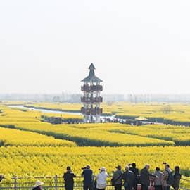 兴化千垛油菜花景区