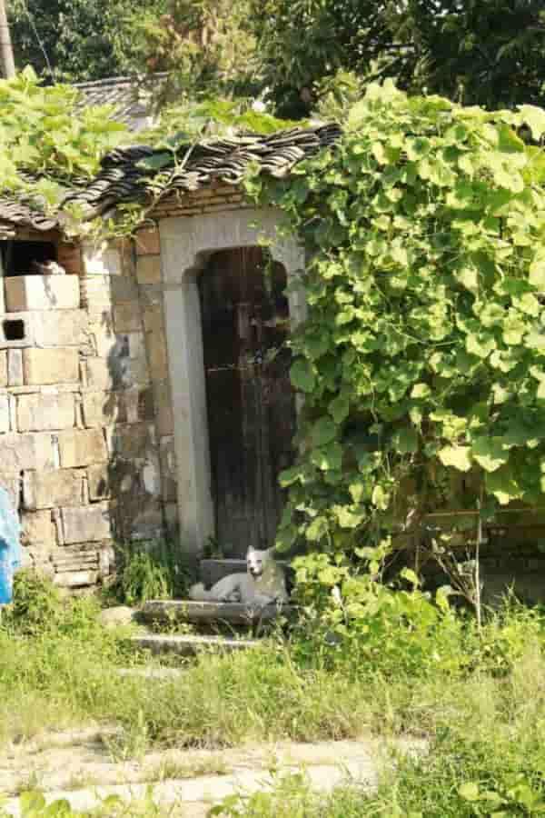 查济古村 我从宣城自驾游到市泾县查济古村,这里保留了最原始的徽州建筑,石雕、祠堂、砖雕、牌坊,这里没有一般古镇的嘈杂街道,只有静雅和幽长的石路