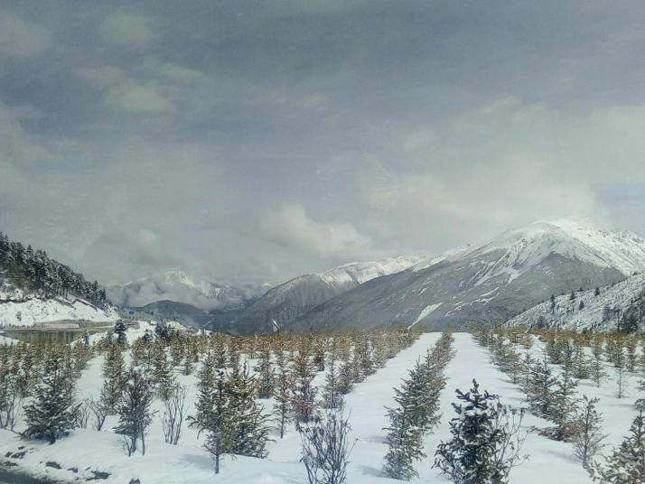 明永冰川旅游绝对是一个好地方,自驾游到迪庆,去明永冰川徒步四小时,深入林间去感受河流和冰川和负氧离子对呼吸道的碰撞