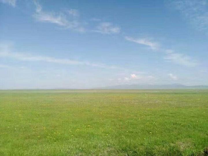 自驾游到若尔盖草原上的的时候,哪里的草已经开始生长了。这片草原属于浅草草原。不像内蒙古草原,没有风、草、牛羊的景观。然而,在蓝天、白云和阳光的照耀下,诺盖草原就像一张铺在地球上的巨大绿色地毯,非常美丽壮观。