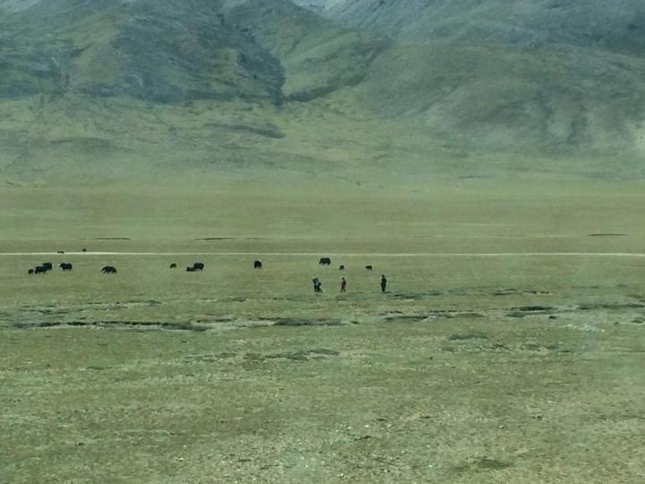可可西里自然保护区,无人区并不是你想去就能去的,如果去,必须遵守规则。 如果发现有野生动物出现,不能停车,不能打扰,只能远观。其实,只要能见到这些宝贝,便已是大自然最厚重的恩赐了。你看,山顶上那一群野驴,多么恬静的一幅美景。