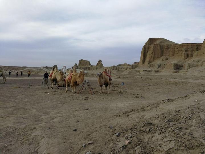 乌尔禾魔鬼城在新疆克拉玛依市乌尔禾区,从乌鲁木齐自驾游到乌尔禾魔鬼城四百多公里,接近六个小时的路程,典型的沙漠雅丹地貌。