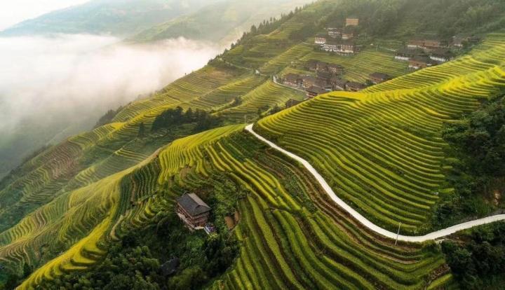 到龙脊梯田旅游,是从桂林开车自驾游的一小时三十分钟到,这里住着两个少数民族,壮族、苗族龙脊梯田就是他们赖以生存的田地,如今通过旅游发展起的旅游业让他们的日子越过越好。