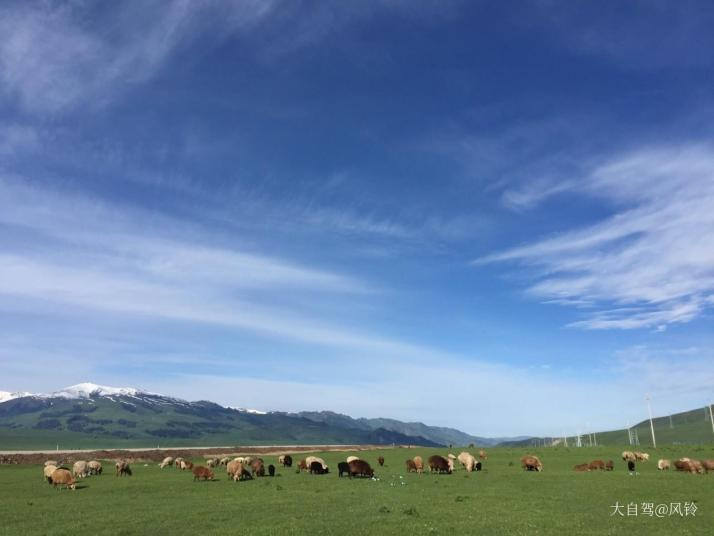 唐布拉草原是伊犁五大草原之一,乌鲁木齐开车自驾游走独库公路都需要7个小时,四百多公里路,唐布拉草原是315省道中最美的精华段。