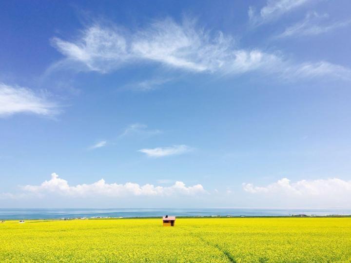 青海湖景区是青海省自驾游第一站,也是青海的代表景点,感觉青海湖自助游是最佳旅游方式,湖边的油菜花将青海湖装点成一个高原上害羞的女孩一样的可人爱。