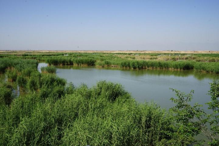 """沙湖,我们去年全家人自驾游去的宁夏沙湖旅游,沙湖是一处融江南秀色与塞外壮景于一体的""""塞上明珠""""。我们来的时候沙湖遍处芦苇,游船进内,仿佛置身于白洋淀。喜欢拍照的朋友,一定要早上来,宁夏的天空分外的蓝,芦苇的绿与沙的黄与天的蓝,构成的景色不会让你失望。"""