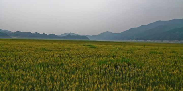 丹东绿江村,是我们在辽宁自驾游的第三站,丹东绿江村沿鸭绿江而建,世世代代受鸭绿江的馈赠。