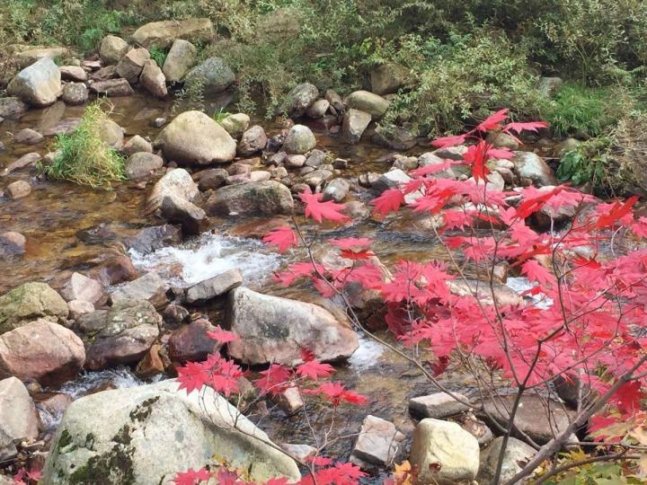 天桥沟国家森林公园,从沈阳自驾游接近四个小时,两百公里,山上花开红叶是天桥沟国家森林公园最美的季节,景区还能近距离看到酿酒,直接用山泉水