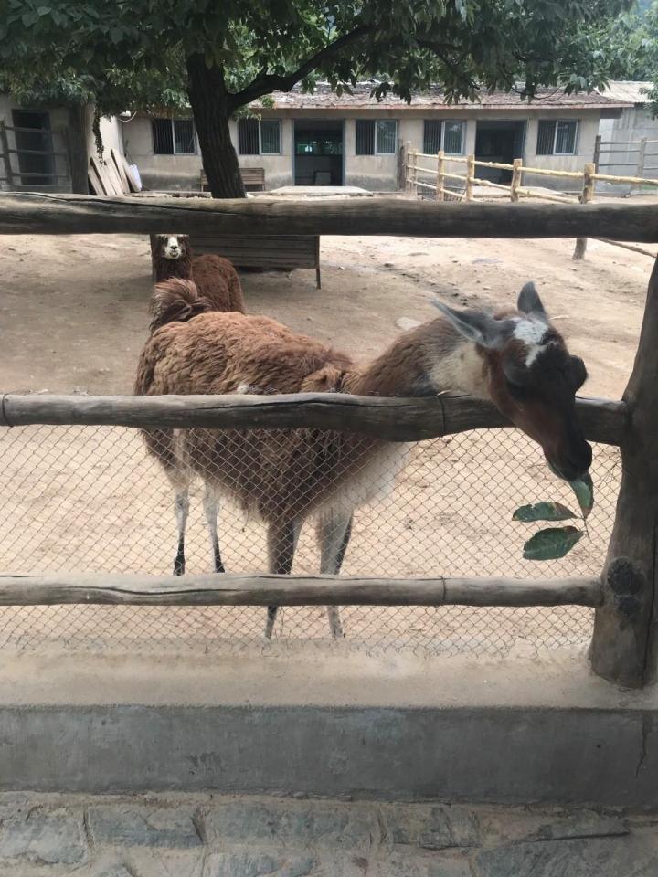 秦岭山脉在陕西汉中,主要是一个看动物的地方,小孩子很喜欢的地方,看野兽去区的时候,是可以坐观光车里看的,景区的停车场也特别大,自驾游方便