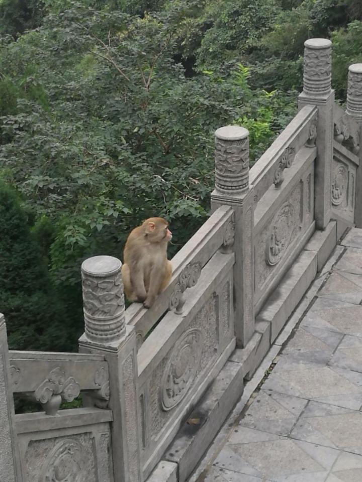 河南济源五龙口是个看猕猴的地方,景区有表演台定时有猴子表演,但是见猴子一定要小心,不要让小朋友去喂猴子