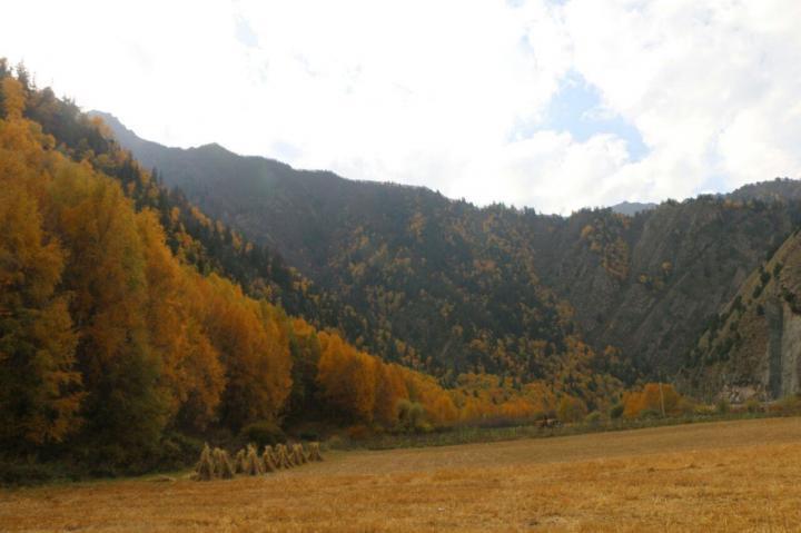 青海仙米森林公园是青海的林区,是一个很养生的绿色地方,从门源自驾游到仙米森林公园的岗青公路,也是一条层林尽染的秋色之路