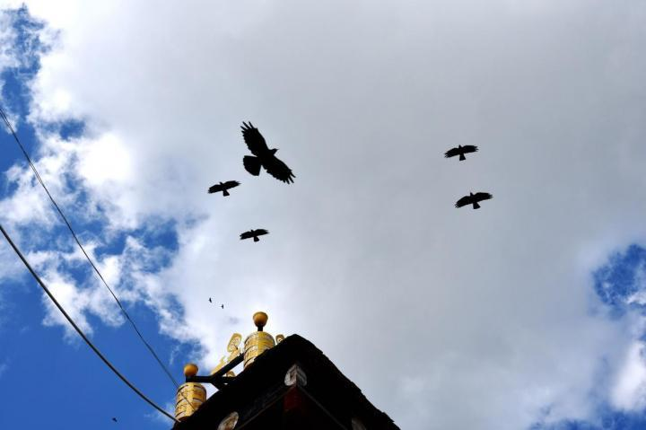 """云南迪庆松赞林寺是香格里拉的""""布达拉宫"""",在松赞林寺的主殿能见到整个寺庙的全景,自驾游的车停寺庙停车场免费"""