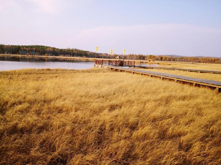 河北七星湖湿地公园在承德市围场县塞罕坝机械林场附近,从北京自驾游到七星湖湿地公园6.5小时,四百多公里,是个秋季变得金灿灿的草场之一