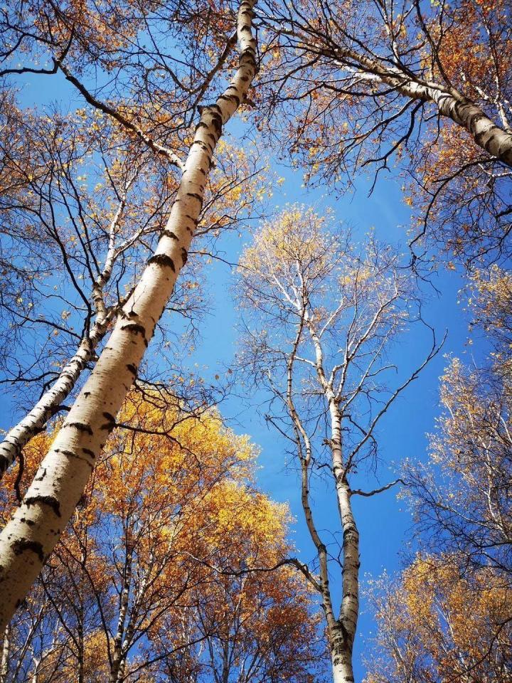 塞罕坝国家森林公园在河北承德境内,最开始知道塞罕坝这个地方都是在电视居里看到的塞罕坝植树才知道,塞罕坝树木对北京的重要性,从北京自驾游到塞罕坝国家森林6.5小时,四百多公里