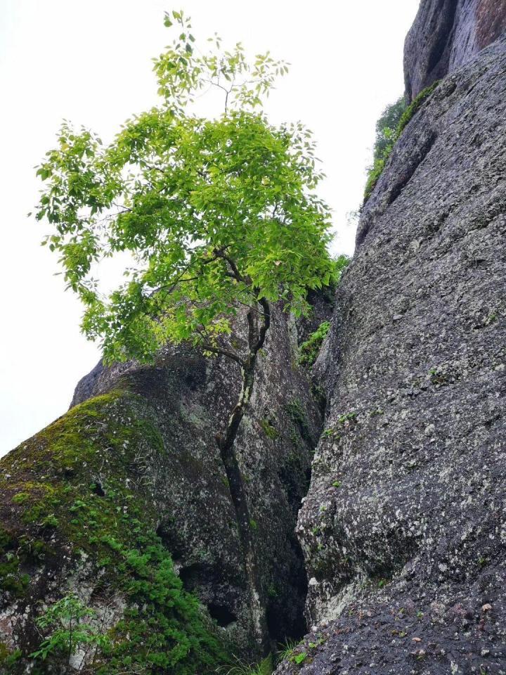 五指石景区,五指石景区的风景是相当不错的,感觉得到空气很清新。总的来说算是很棒的一次旅行。风景很美,也很刺激。跟朋友一行八人,玻璃栈道有点怕怕。胆大的朋友可以多去几次