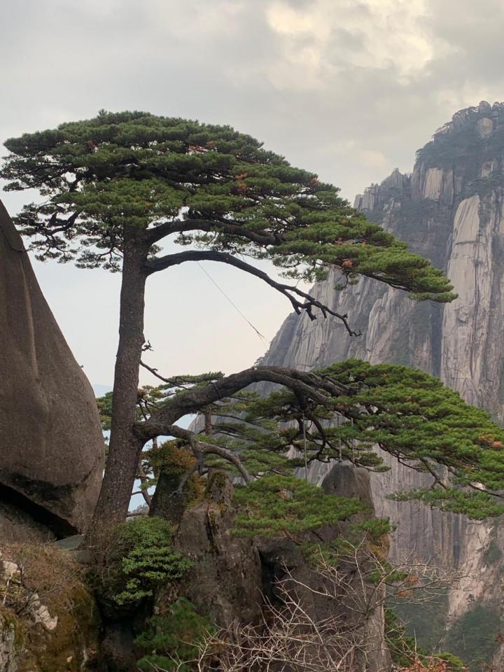 """黄山风景区,黄山集中国各大名山的美景于一身,以奇松、怪石、云海、温泉""""四绝""""著称于世,黄山更像一个商业化的旅行景点。黄山只有长凳,没有免费的桌子,吃饭很不方便,山上吃饭价格很高。"""