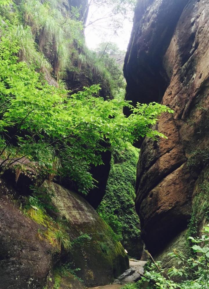 武夷山大红袍景区,武夷山旅游景点大全主要是大红袍这棵树:武夷山大红袍景区的地标景观是:大红袍母树,就是六棵小小的灌木。刻的红字旁边的几棵树就是大红袍母树。号称用大红袍茶做的茶叶蛋;这六棵大红袍母树已经有360多年的历史,作为古树名木列入世界自然与文化遗产。这个景点,重在感受武夷山的茶文化,景色很一般。