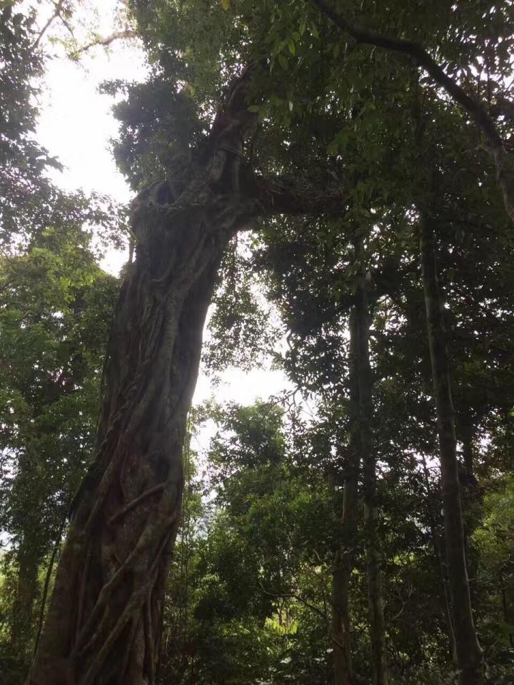 尖峰岭国家森林公园,尖峰岭天池在尖峰岭景区内,天池的水根据天气的原因展现出不同的景象,与周围的风景合二为一,美轮美奂! 雨后尖峰岭国家森林公园的清晨,身在天池仿佛置身仙境。
