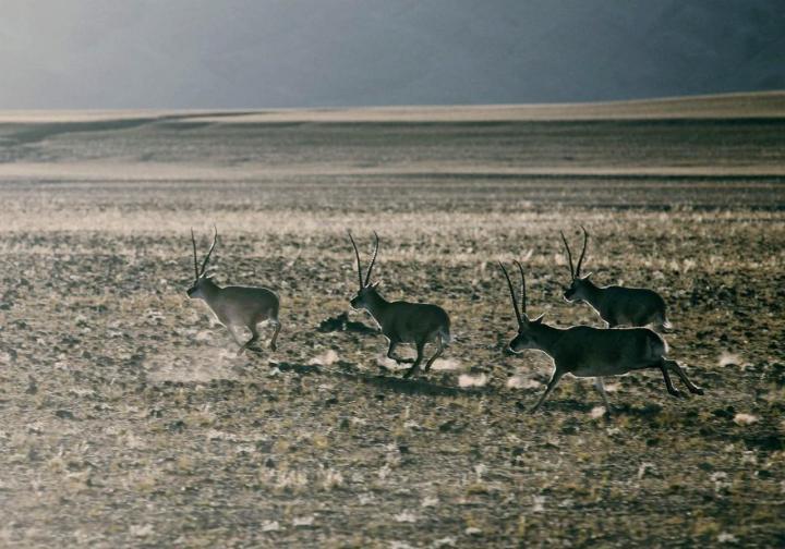 申扎自然保护区,申扎自然保护区建于1993年,位于那曲申扎县附近。在这里游玩偶尔可以看到黑颈鹤等野生动物,申扎自然保护区也是国家一级保护动物黑颈鹤的理想场所