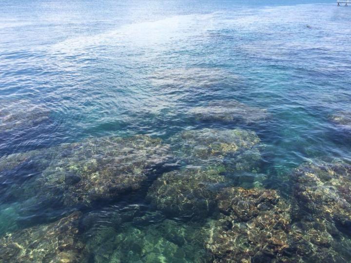 西岛景区,自驾游去的,在网上买的票,95一张包括景区和往返船票,去时坐船有点晕了,最好是坐在有窗户边的,大概13分钟就能到,海水太清澈了; 这里有一条路连接着牛岛,牛岛面积较小,最醒目的就是山顶上的金牛雕像,这里的海水十分漂亮; 之后去了渔村,渔村里也有一些比较有名的小景点,比如珊瑚老屋、文创馆、海上书店等。