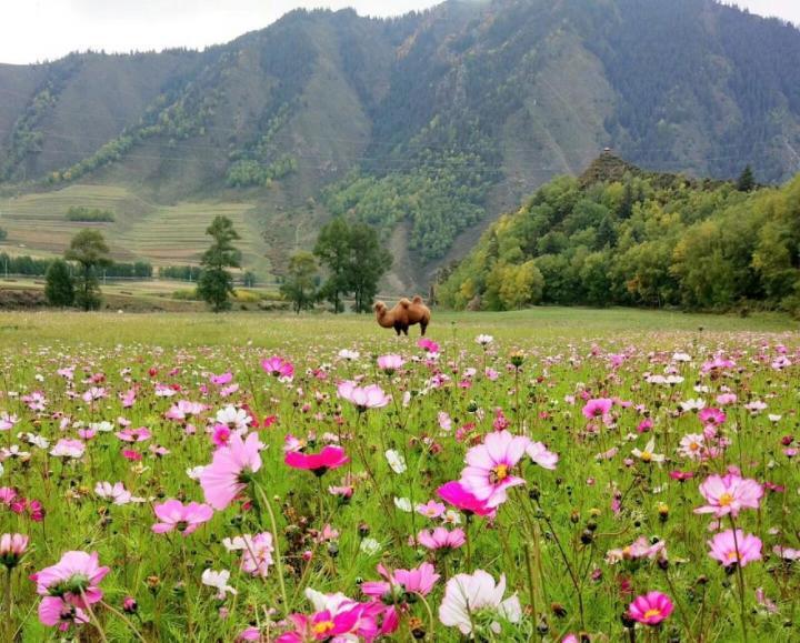 仙米森林公园,仙米森林公园是青海省面积最大的林区,10月的仙米公园,一片繁华多彩,彩林幽幽,河水倘佯,犹如世外桃源一般。大通河穿境而过,秋季的景色非常漂亮。