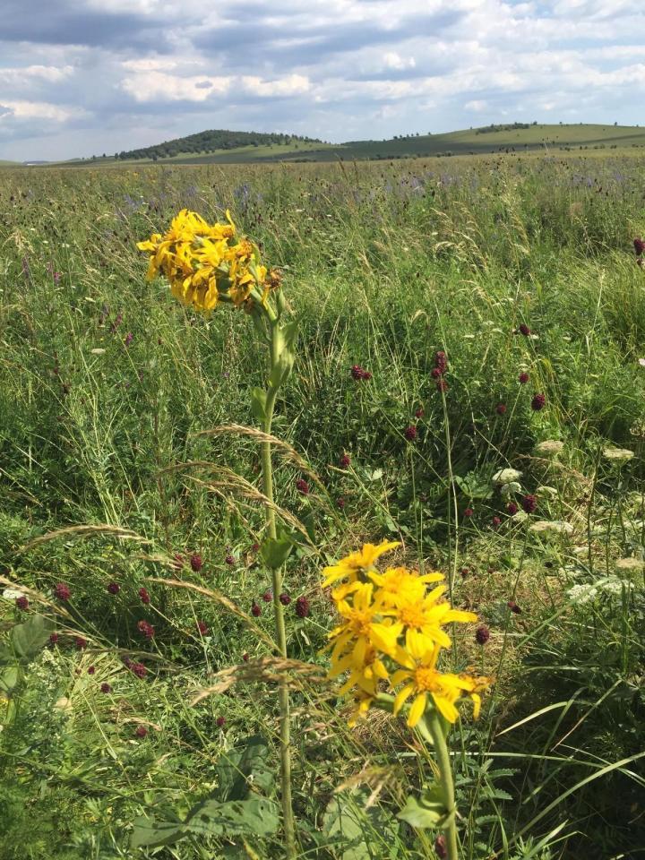 木兰围场,承德木兰围场是集森林草原为一体避暑好地方。承德木兰围场的景色很适合自驾游,辽阔的草原风情,远离城市的喧嚣。还可以体验一把牧民的边境生活