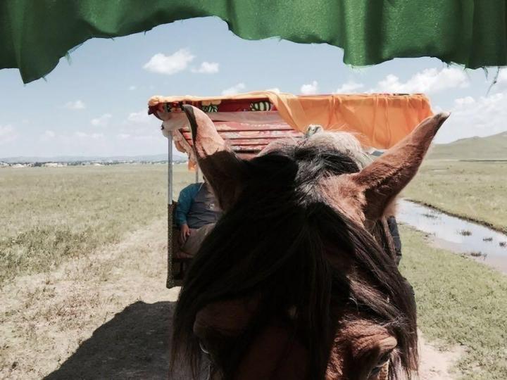 """将军泡子,将军泡子位于乌兰布统景区内的一个小海子,""""将军泡子""""这个地名的来由,据史书记载和民间说法,乃当年康熙皇帝亲征,击溃漠西葛尔丹叛军的地方。 从路口停车场到里面的湖边,还有很长一段距离,走路大约半小时左右。可以骑骆驼、骑马或者坐马车。"""