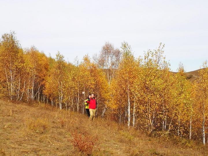 乌兰布统影视基地,乌兰布统影视基地山缓川平,水草丰盛,有草场、有湿地、有桦树林、有山丘,每年吸引数以万计的艺术家来此采风,是摄影家的创作基地、美术家的十里画廊、影视家的露天影棚。观景台不错,提供了很好的拍摄视野,尤其是站在观景台背朝景区入口,能有图片中的高质量视角