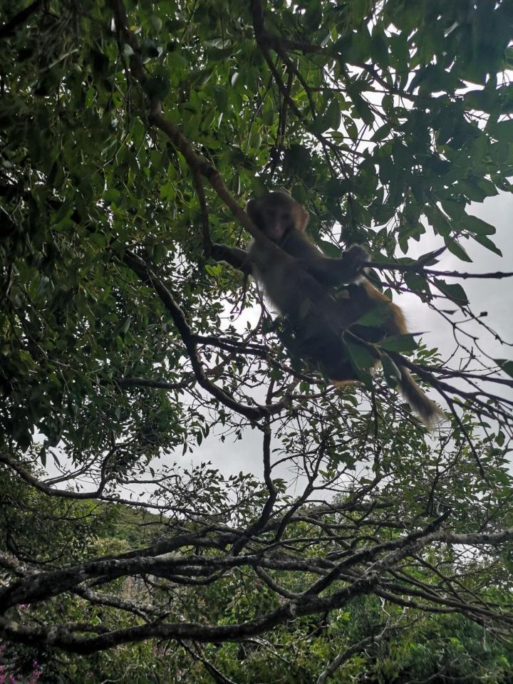 南湾猴岛,南湾猴岛门票180元,进去主要是看猴子的,南湾猴岛是我国唯一的岛屿型猕猴自然保护景区。岛上的猴子很凶!