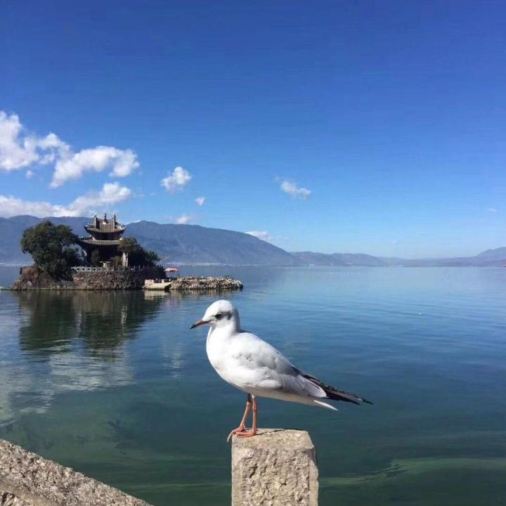 大理小普陀,大理小普陀就是一座独立的小岛,上面有一座小庙。给苍山洱海这种纯自然的背景,又增加了一些历史人文的点缀。 而且这里有很多海鸥,数量很多,但又没多到昆明滇池海埂旁边那么多的情况,不用担心被鸟屎空袭