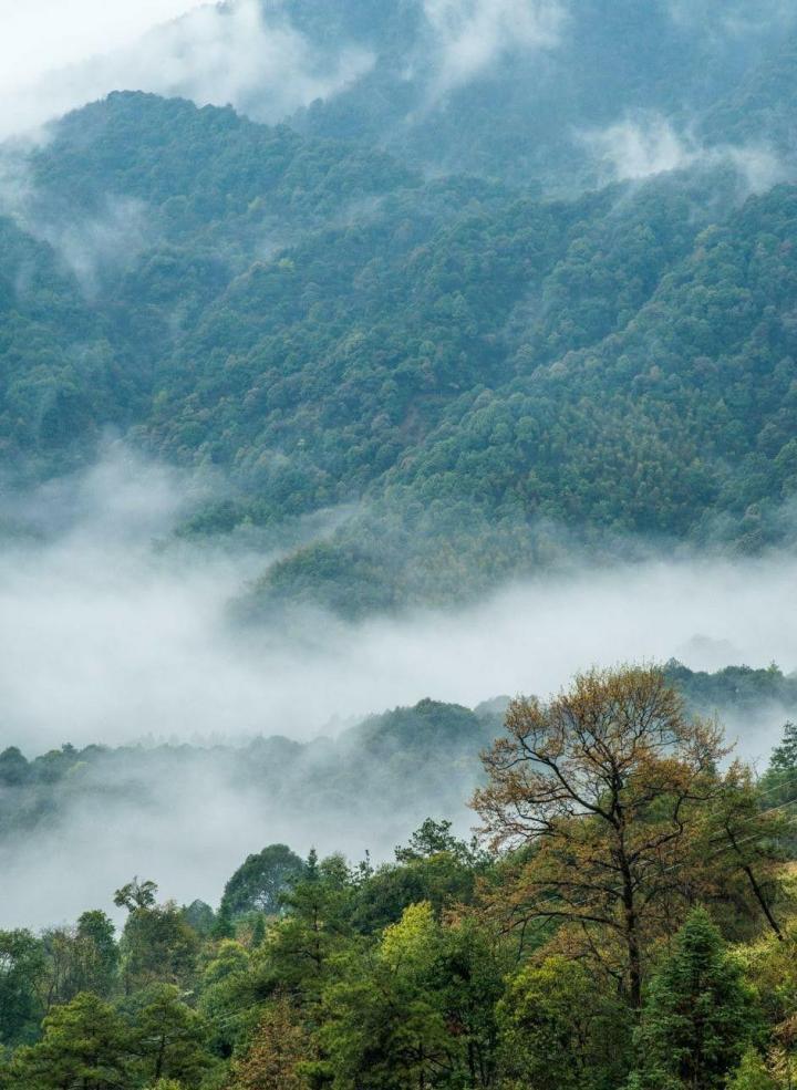 石城晨雾,秋天的 石城 ,慵懒而又美艳。尤其是每天清晨,村子里的居民做早饭而产生的缕缕炊烟,凝聚在晨雾中,聚而不散,萦绕在古村落之间,使这充满古 徽州 建筑特色的程村若隐若现,有如置身于天上人间般的虚幻缥缈之中。