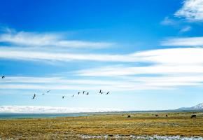 """阿尔金山国家级自然保护区位于新疆若羌县境内,与青海和西藏相毗邻,面积45000平方公里,平均海拔高度4600米以上。阿尔金山国家级自然保护区边远偏僻、高寒缺氧,使得保护区内保留了中国特有和珍稀的野生动物。由于保护区独特的地理环境和丰富的自然资源,这里是""""世界上少有的生物地理省之一,是不可多得的高原物种基因库""""。"""