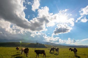 新疆乌鲁木齐集合11日北疆-西疆自驾:喀纳斯+禾木+可可托海+那拉提+独库公路+江布拉克+唐布拉百里画廊之旅