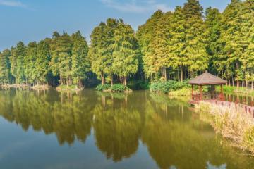 北京出发江苏浙江7日自驾游:李中水上森林公园-超山-西塘-杭州7日自驾游