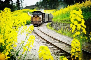 【开向春天的列车】罗城古镇、犍为小火车2日游