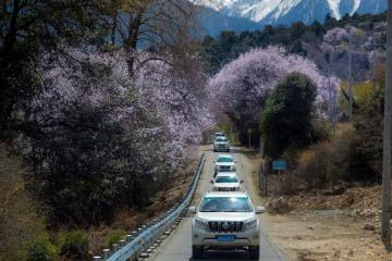 【天路自驾】西藏林芝桃花节7日落地自驾