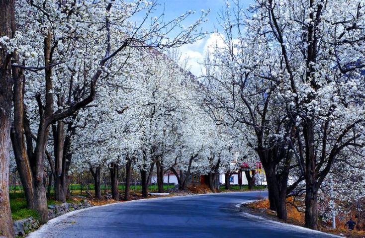 在我去甲居藏寨的路上,听说金川梨花很美,正好途中经过金川沙耳乡,漫山遍野的梨花,很是漂亮。