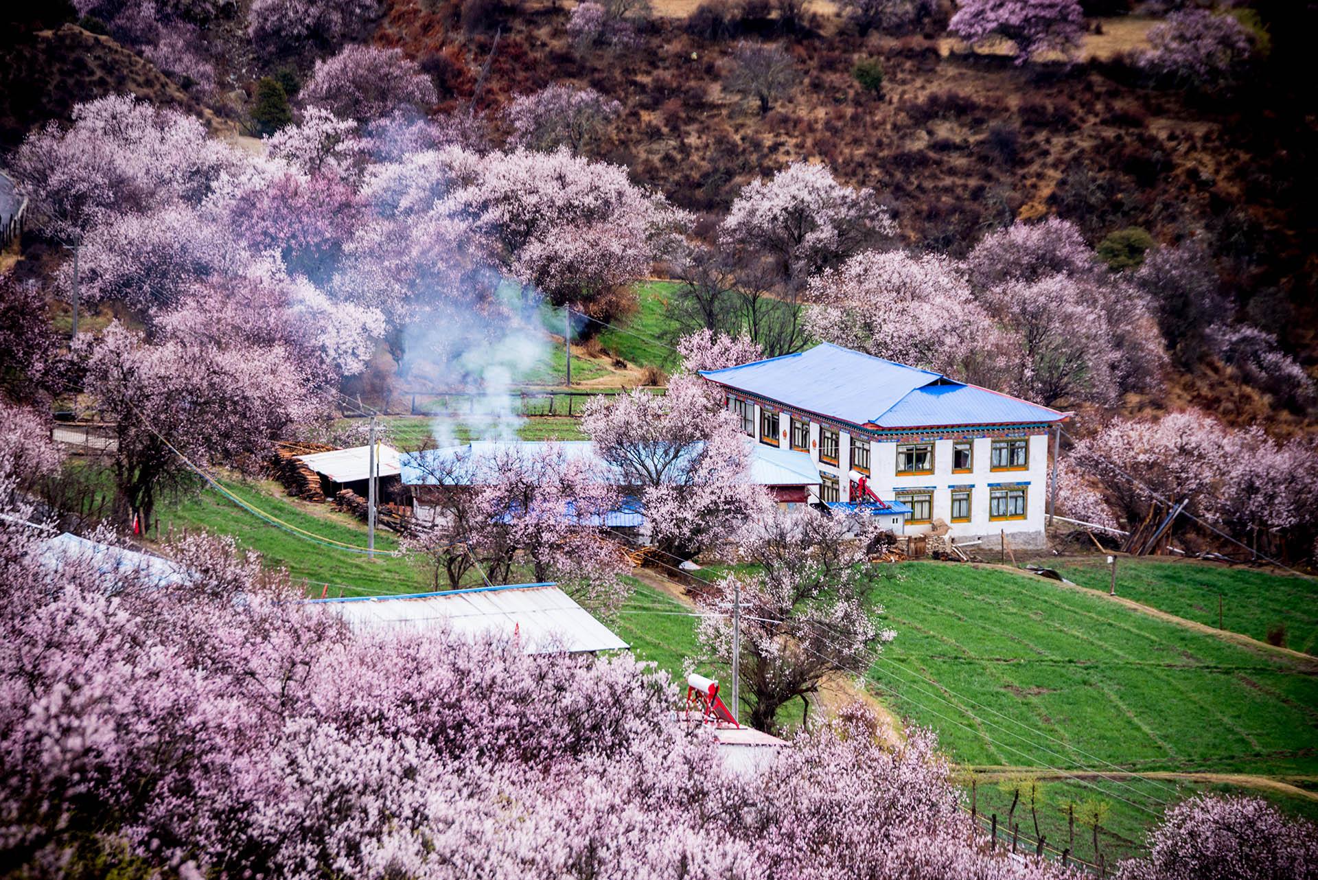 号称西藏江南的林芝地区,每年3-4月举行的桃花文化旅游节,是林芝旅游开发的一大名片。林芝的桃花是高原的桃花,雪山山脚桃花盛开,林芝桃花每个县都有桃花的身影,但开幕式一般是在巴宜区嘎拉村,北游工布江达县,南游米林县和波密县,其中波密县波堆藏布流经倾多镇—许木乡桃花沟绵延达30公里,被称为中国最长的桃花沟。