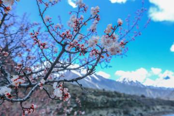 【天路自驾】G318川藏南线+林芝桃花节9日落地自驾
