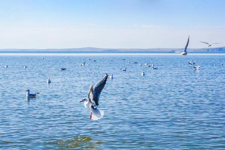 东北五一自驾游攻略,阿尔山,满洲里、呼伦湖