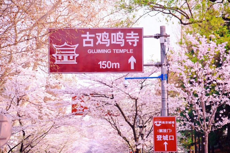 五一南京自驾游,市区周边景点推荐