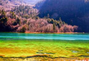 """五花海位于九寨沟三条沟的日则沟中段,孔雀河上游,由于海底的钙华沉积、各种色泽艳丽的藻类以及岸边五彩斑斓的林木倒影,使得五花海呈现出鹅黄、藏青、墨绿、宝蓝等各种颜色,故称""""五花海""""。乘坐景区环保车可直达五花海。沿着湖畔的栈道缓缓前行,五花海西侧的一段栈道是最佳观赏点之一。平静的湖水倒映着五彩的林木和蓝天白云,非常漂亮。"""