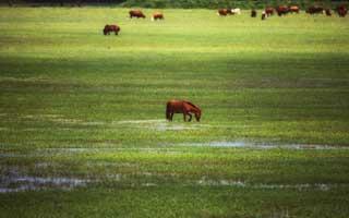 玛曲阿万仓湿地