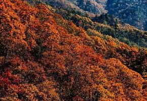 马鬃岭(国家AAA级旅游景区、国家级自然保护区)位于安徽省六安市,因古木参天,森林原始,盛产灵芝、天麻、贝母、三七、竹节参等百余种野生名贵中药材,故而得名百宝山。马鬃岭宛若一匹奔驰在群山峻岭间的神驹之头颈,那高低错落的参天林木就是飞扬的鬃毛,便得其名。这里海拔高3500米,有众多景观,可为游人一饱眼福。
