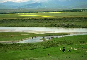 """伊犁河谷位于中国新疆维吾尔自治区西北角,素有""""西域湿岛""""""""塞外江南""""之美称的伊犁是中国西部最富饶的土地之一。伊犁河谷是世界薰衣草三大种植基地之一。"""