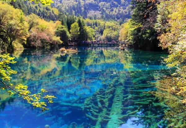 五花海,是九寨沟里面最好看的海子,个人是这么认为的,这里面的树干全部看得很清楚,碧绿的海子真美,天上白云倒影中,美极了。