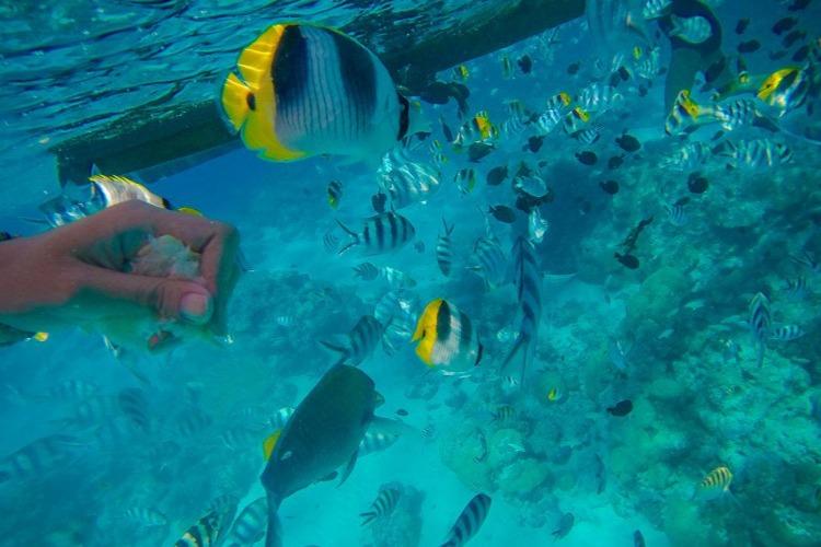 三亚分界洲岛旅游,和魔鬼鱼互动