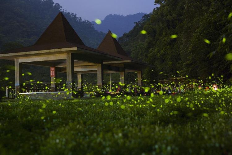 成都周边萤火虫宝藏地,天台山旅游